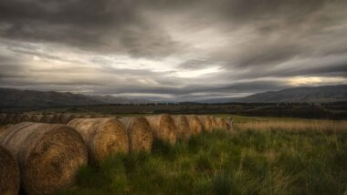 Scene at LandEscape farm. Credit: LandEscape